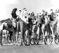 DAURA CAMEL RIDERS