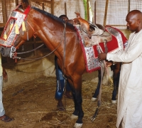 DECORATION OF HORSES
